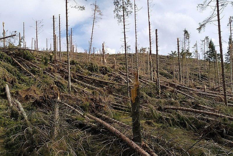 I Boschi dell'Altopiano dopo la tempesta Vaia: LA PIANA DI MARCESINA
